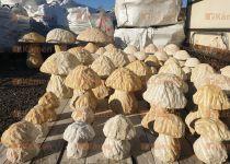 Pískovcové houby